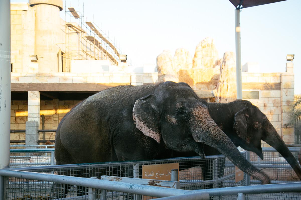 حديقة حيوانات أبو ظبي