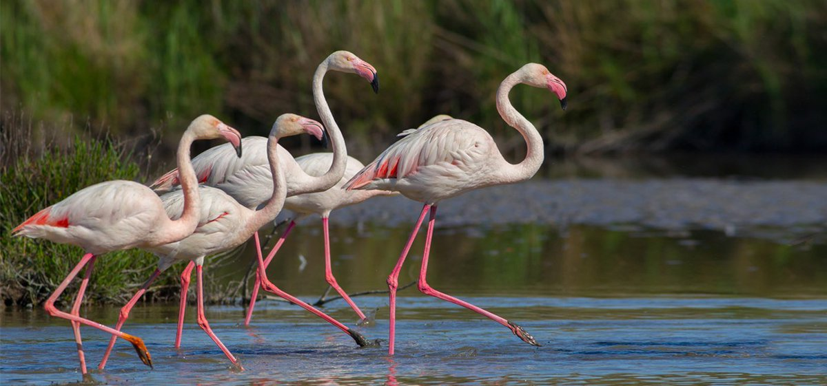 محمية ويتلاند الطبيعية