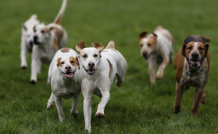 تفسير مطاردة الكلاب في المنام موسوعة