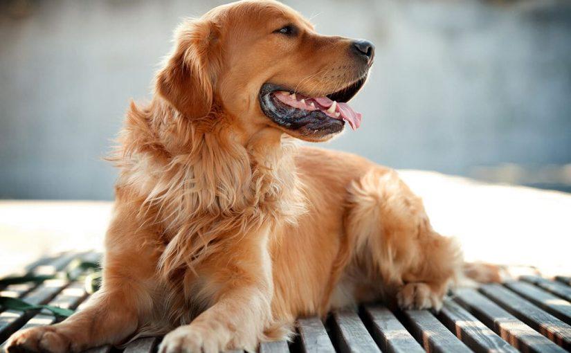 تفسير رؤية الكلاب في المنام لابن سيرين موسوعة