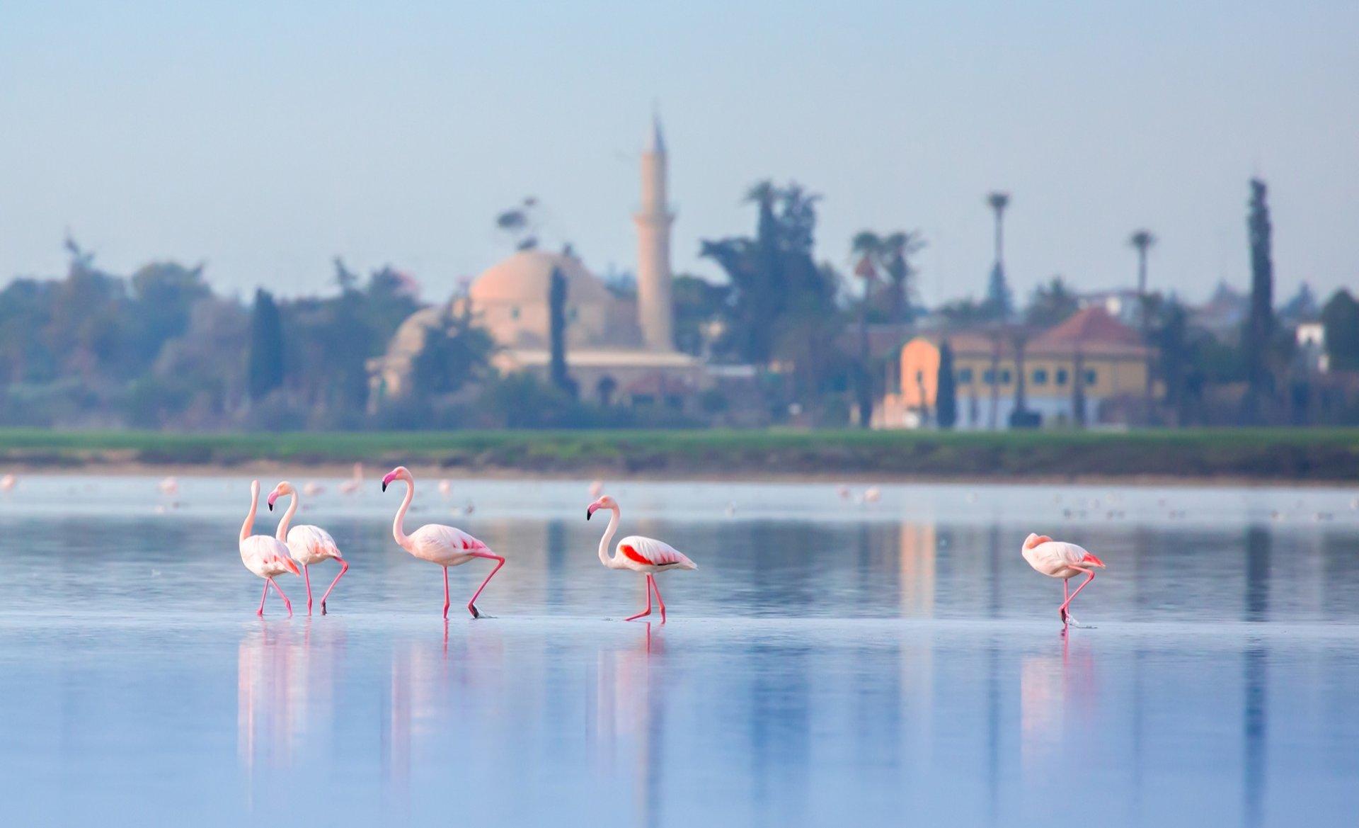 أجمل أماكن السياحة في قبرص