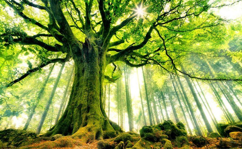 اذاعة عن اسبوع الشجرة