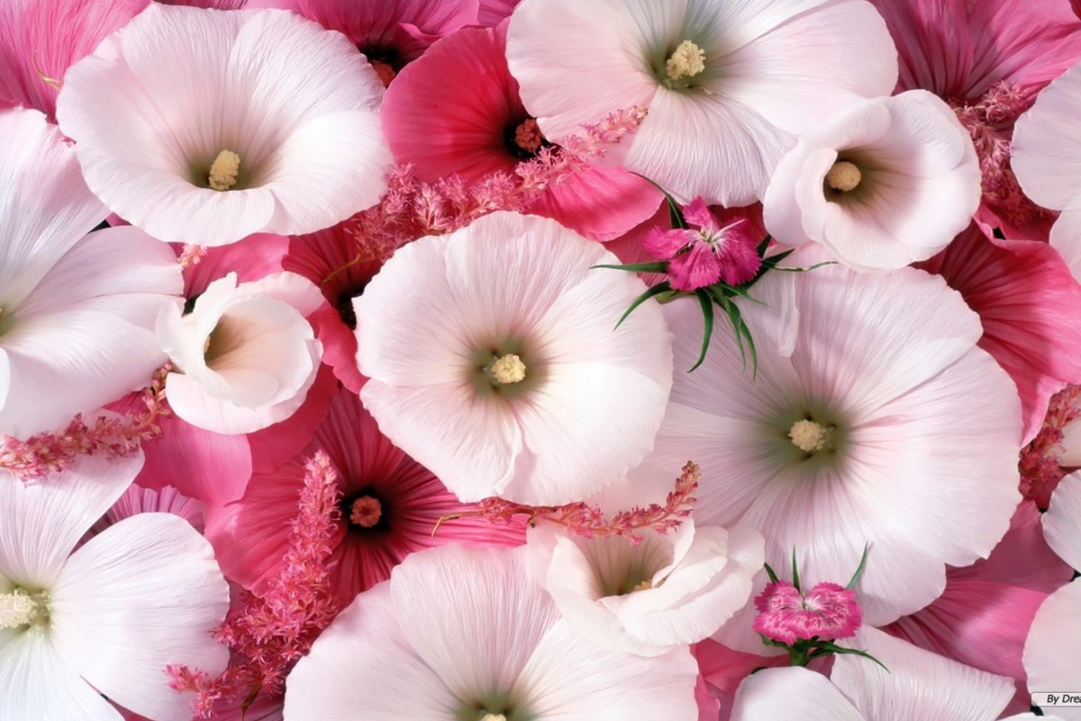 نتيجة بحث الصور عن اللون الوردي في المنام