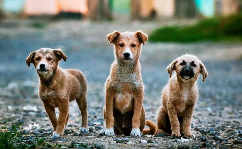 تفسير رؤية الكلاب تجري ورائي في المنام موسوعة