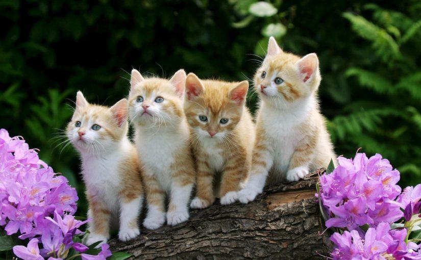 تفسير ما رؤية القطط في المنام و محاولة اخراجها من البيت