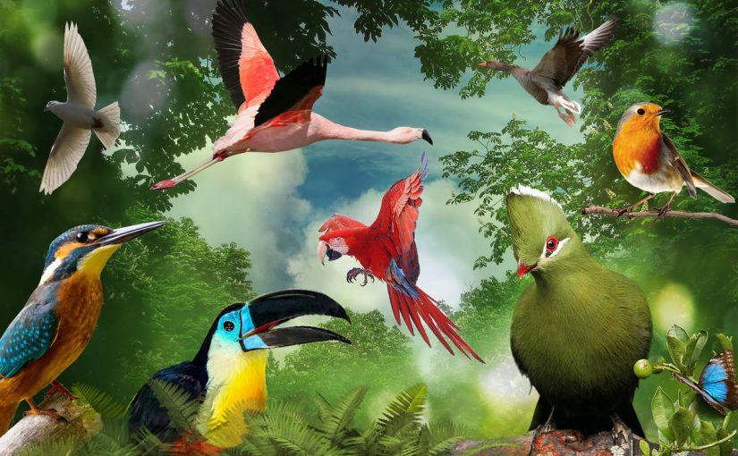 بحث عن التنوع الحيوي doc