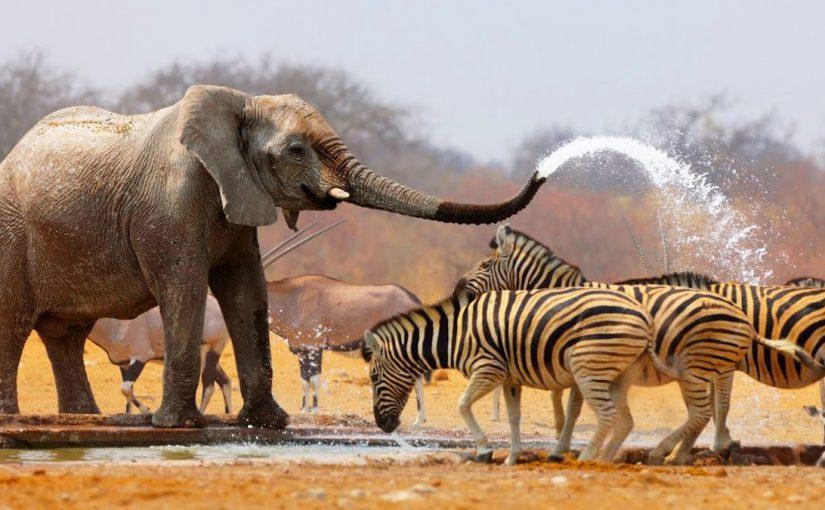بحث عن المخلوقات الحية وعلاقاتها المتبادلة