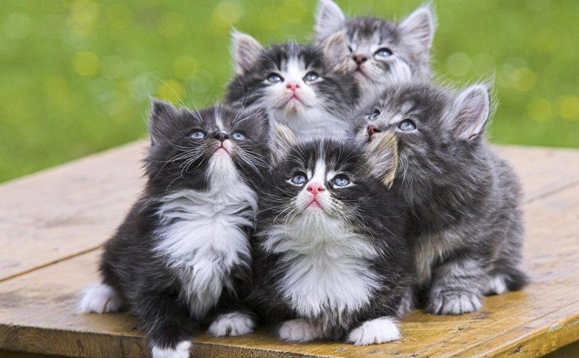 تفسير حلم رؤية القطة في المنام