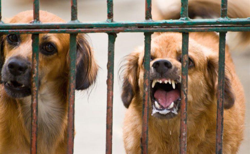 تفسير عضة الكلب في المنام لابن سيرين