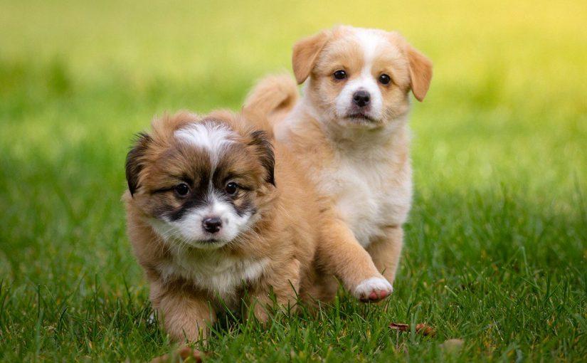 تفسير رؤية الكلاب الاليفة في المنام