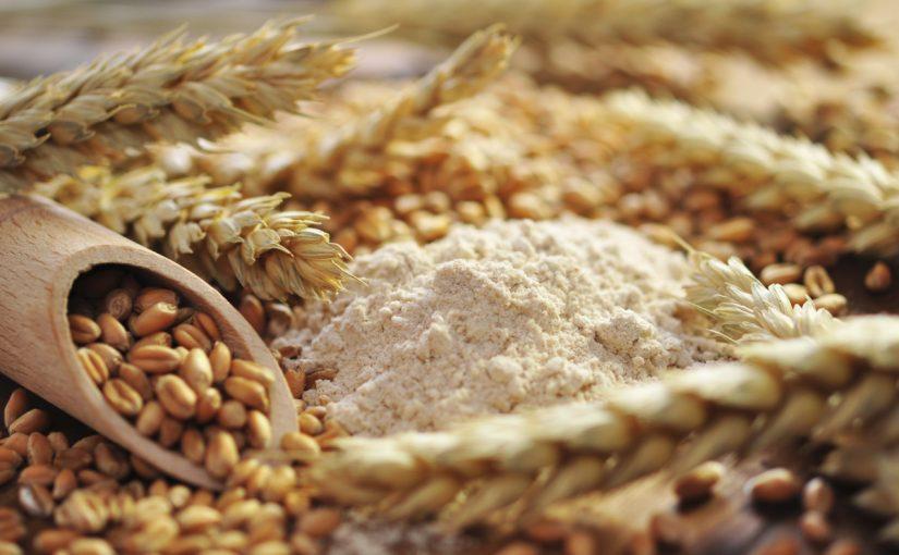 الفرق بين الشعير والقمح وفوائد كل منهما موسوعة