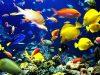 ما هي انواع الاسماك