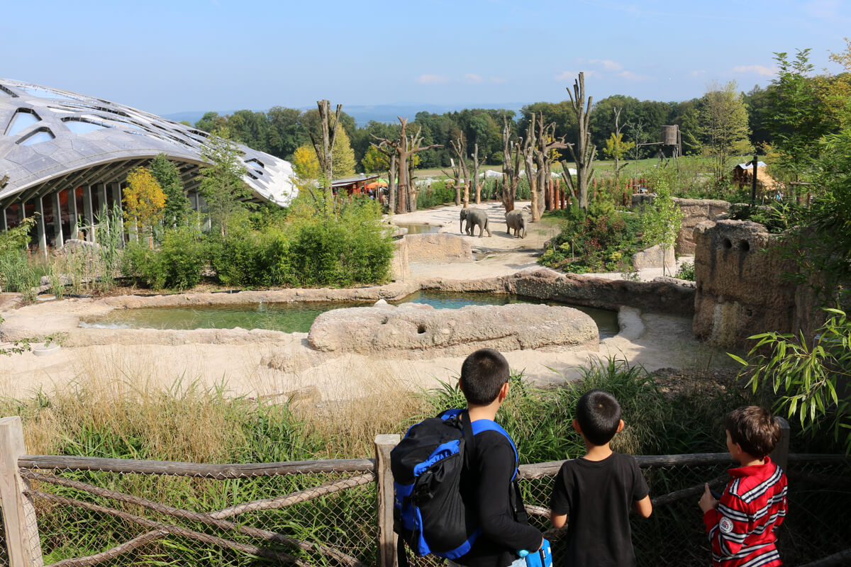 حديقة حيوان زيوريخ