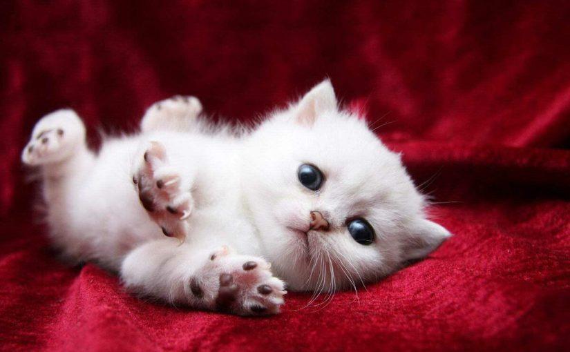 تفسير رؤية طرد القطط من البيت في المنام موسوعة