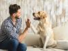 ما هي قوانين امتلاك الكلاب في دبي