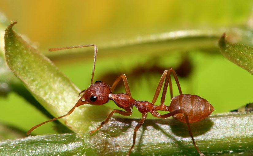 النمل في الحلم