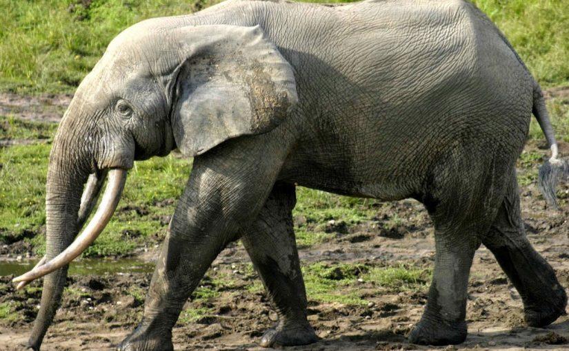 مقتل امرأتين وإصابة 4 في نيبال بسبب فيل