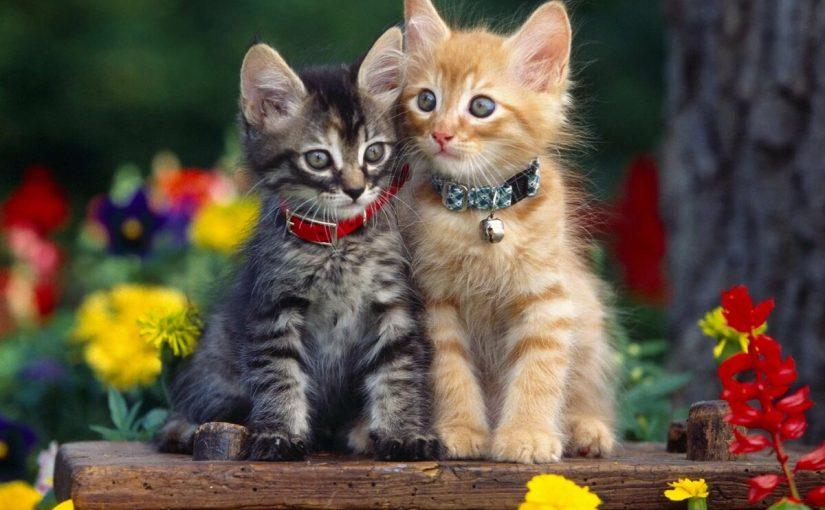 اسماء قطط اناث بالتركي