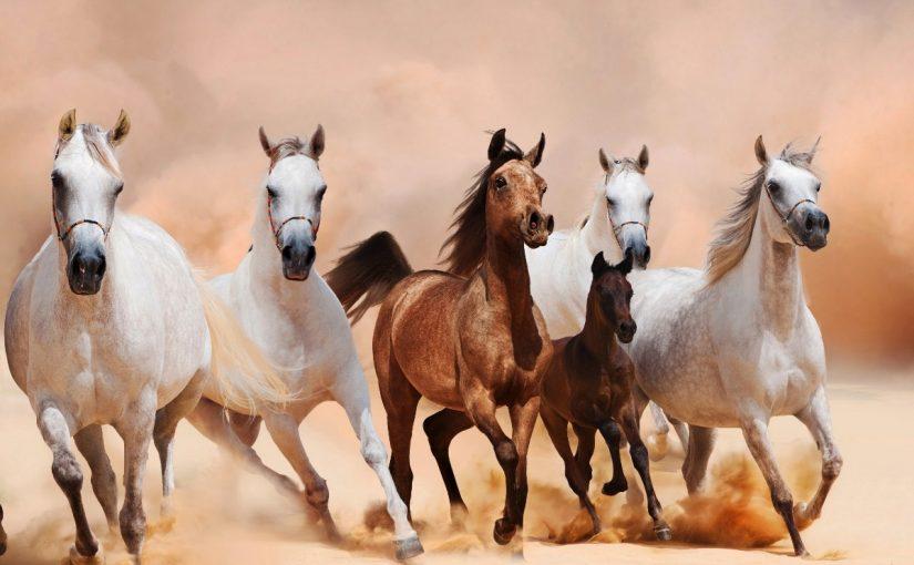انواع الخيول