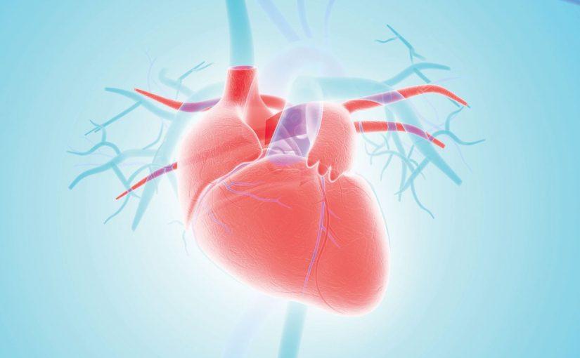 ما هي فوائد القلب