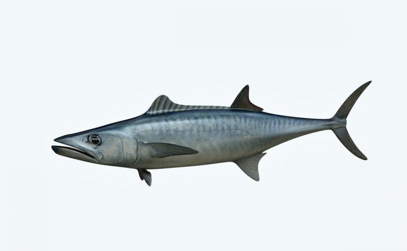 فوائد سمك الكنعد للجسم موسوعة