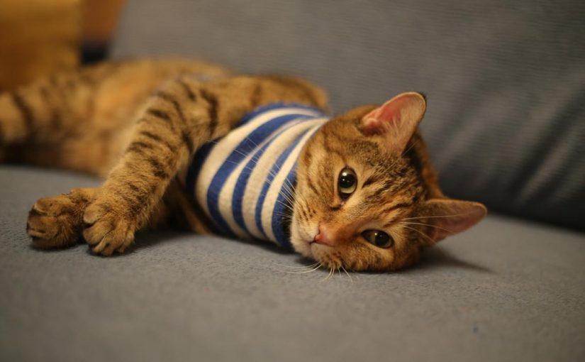 اسماء قطط بالانجليزي