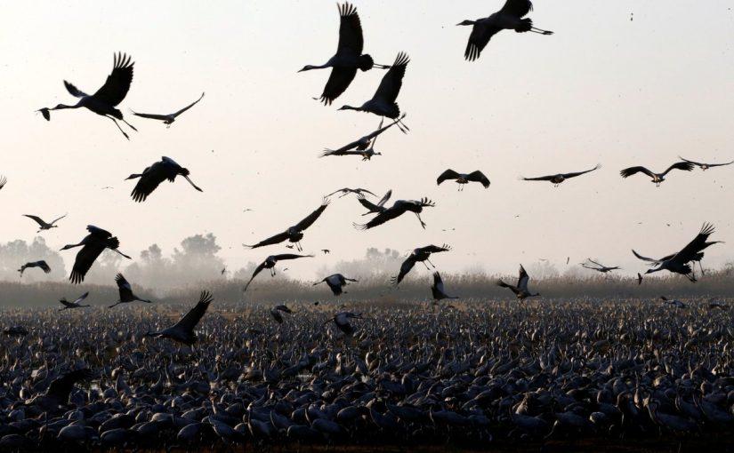 معلومات عن الطيور المهاجرة