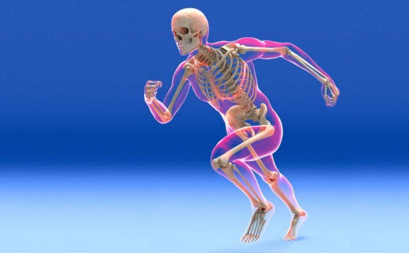 ما هو تعريف الهيكل العظمي