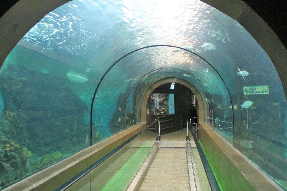 حوض سمك بوكيت