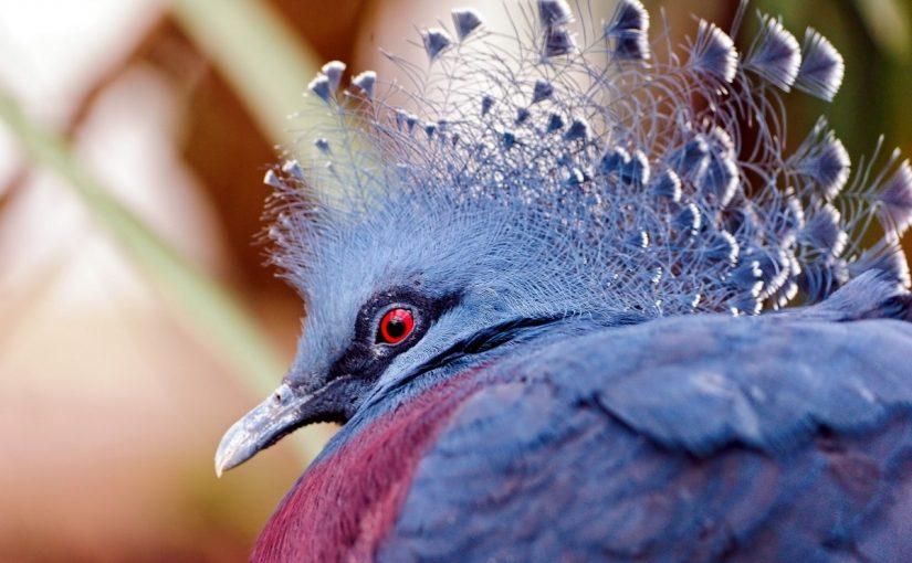 انواع الطيور واسمائها ومعلومات عنها