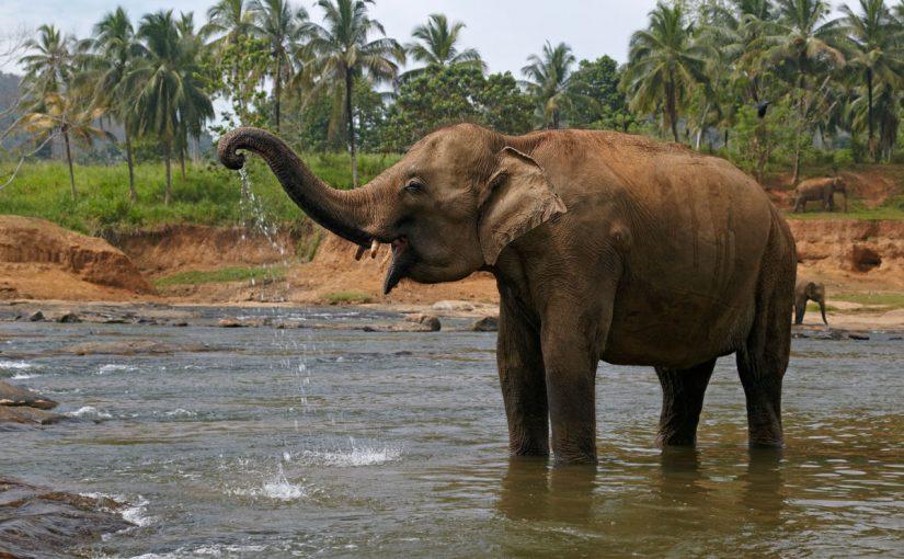 الفيل في المنام