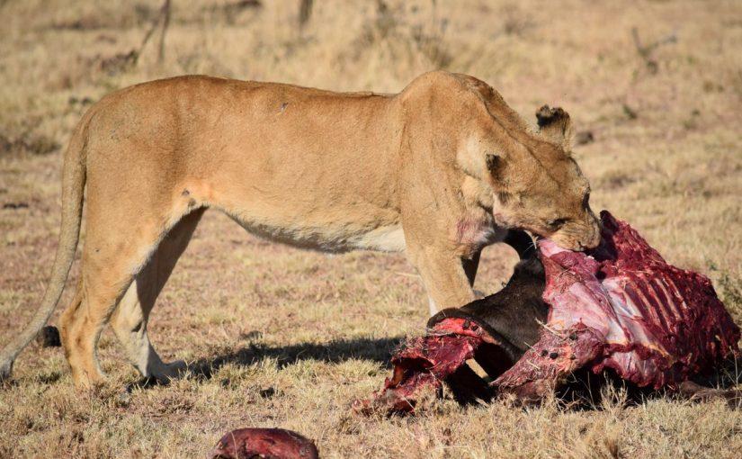 اسماء حيوانات اكلة اللحوم
