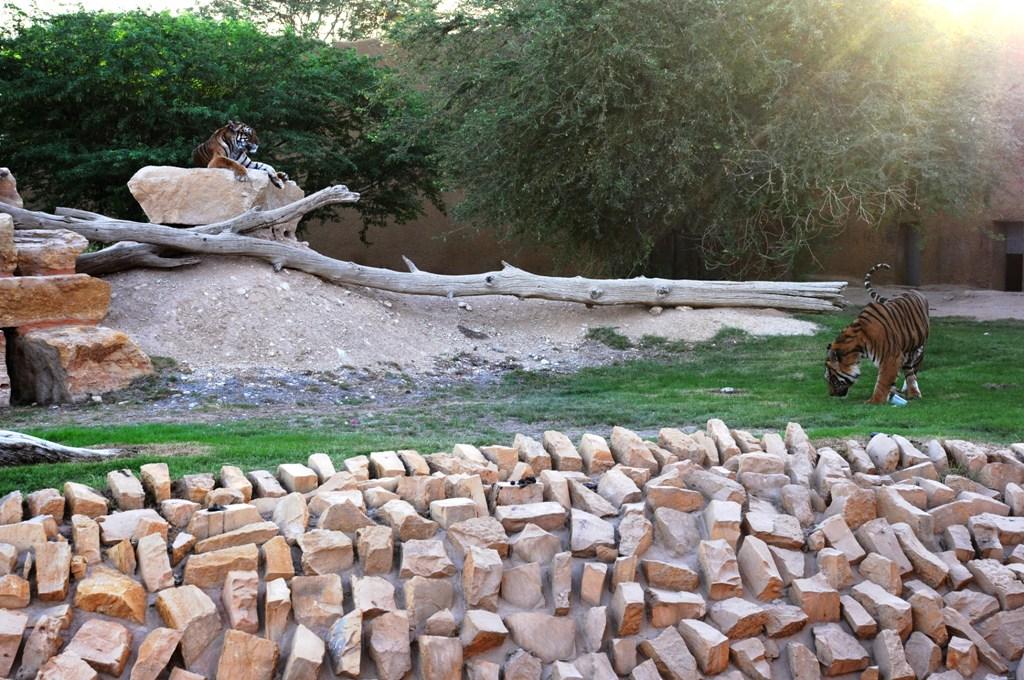 مواعيد زيارة حديقة الحيوان بالرياض 2019 Sahara Blog S