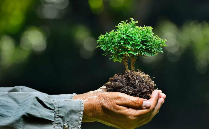 مقدمة عن البيئة
