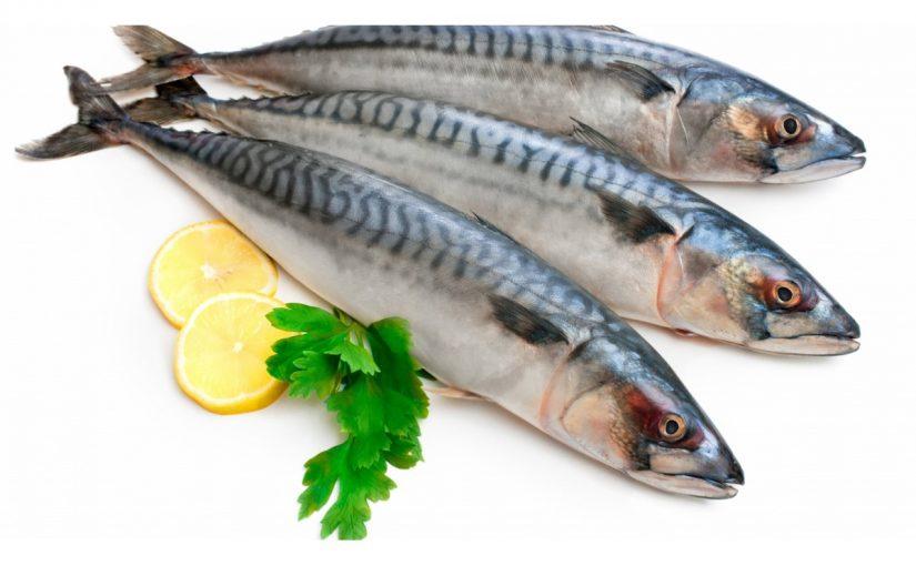 معلومات عن سمك الماكريل