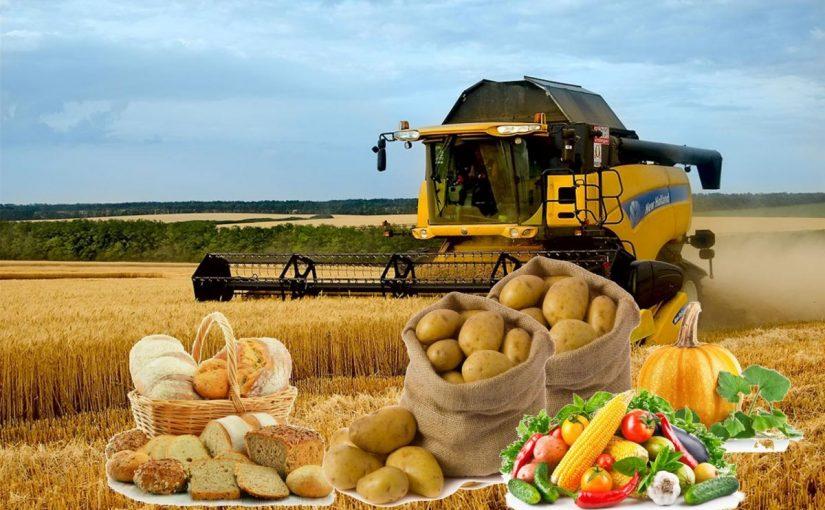اهم المحاصيل الزراعية فى المملكة العربية السعودية