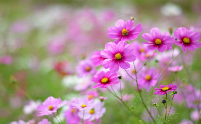 قصيدة صفي الدين لفصل الربيع