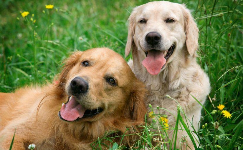 امراض الكلاب واعراضها