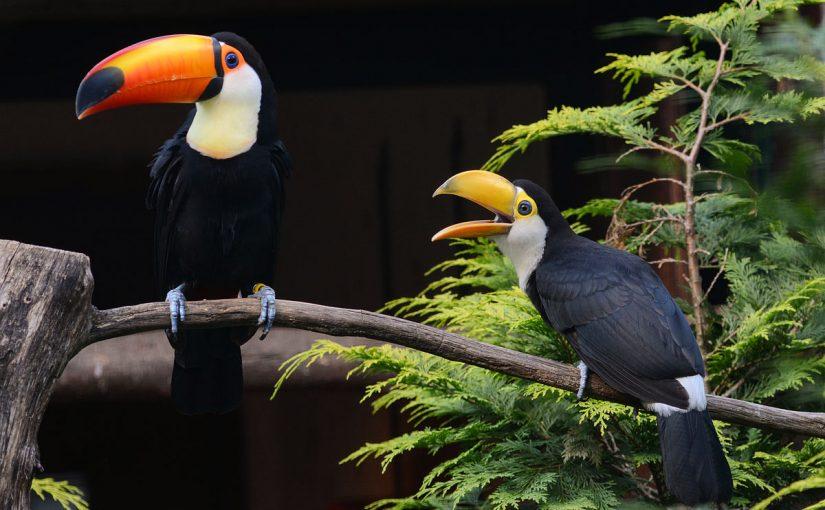 معلومات حول طائر الطوقان