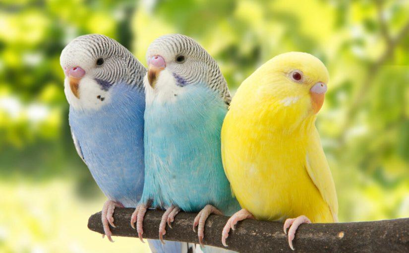 معلومات عن الطيور وطرق تربيتها