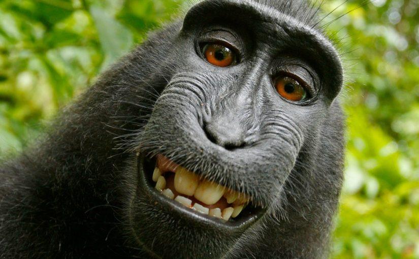 بحث عن حيوان الشمبانزي