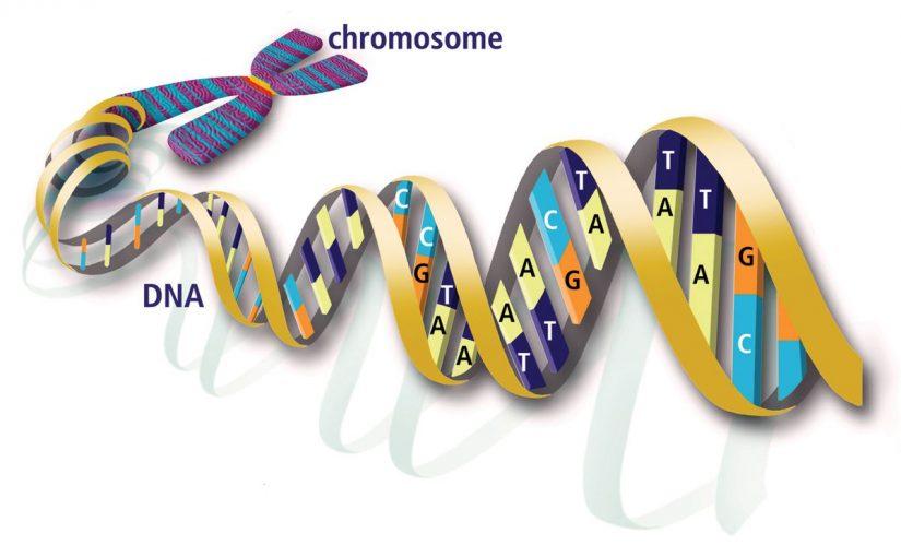 الوراثة المندلية