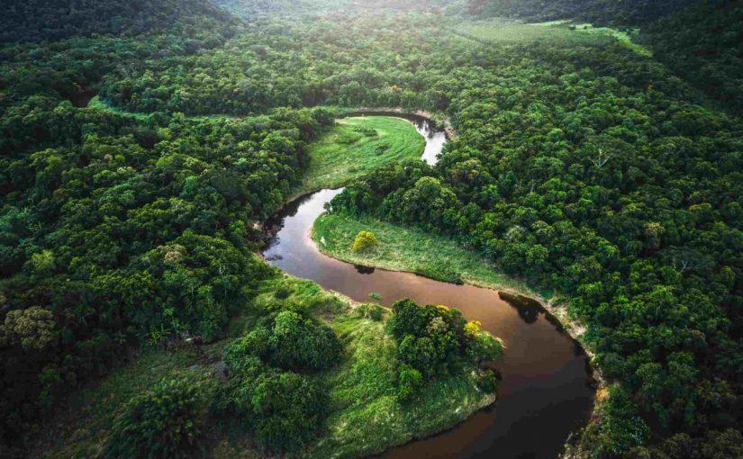 معلومات عن غابات الامازون