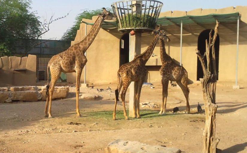مواعيد حديقة الحيوان بالرياض 2020 موسوعة