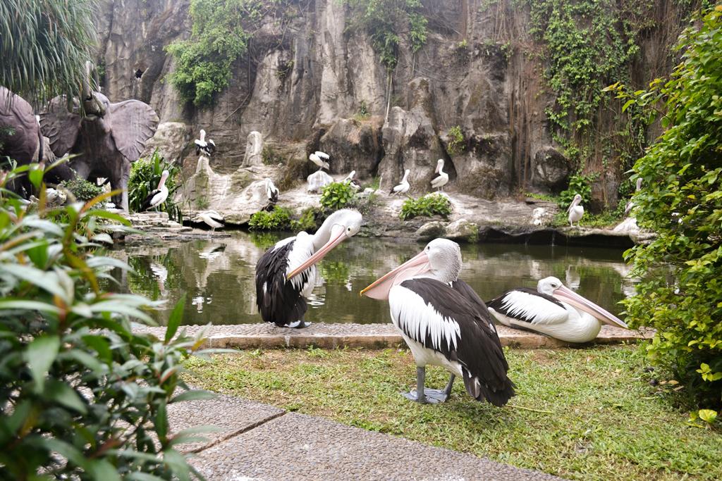 حديقة حيوان راغون