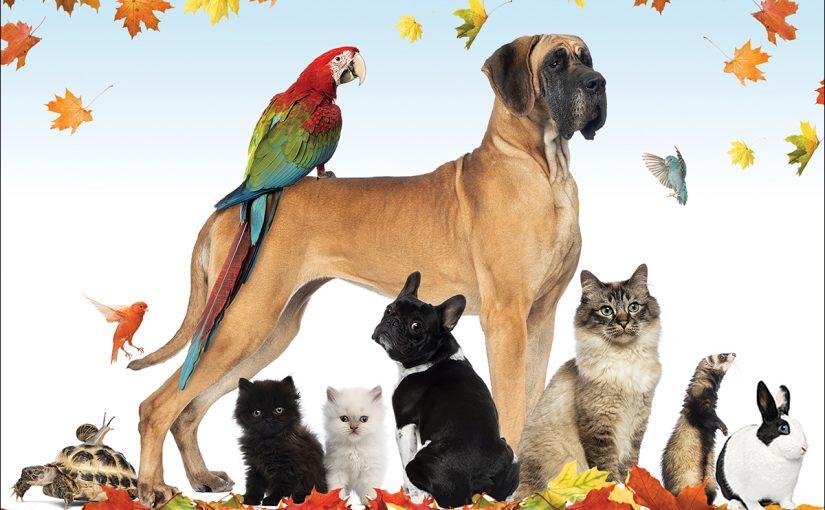 حيوانات اليفة للتربية في البيت