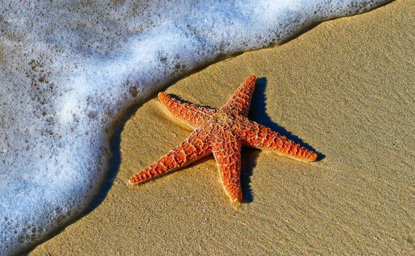 معلومات عن نجم البحر