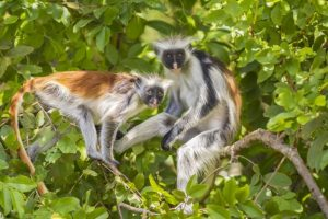السياحة في تنزانيا زنجبار