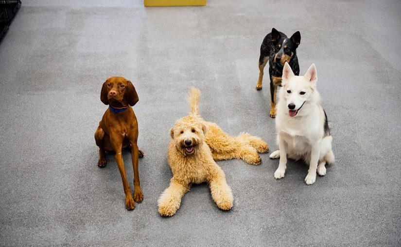 8 كلاب متاحة للتبني في دبي تبحث عن الحب