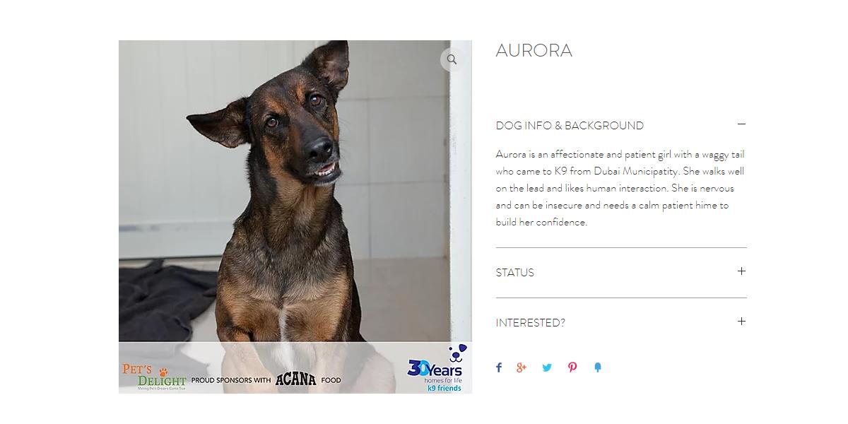 أفضل كلاب جيرمان للتبني في دبي 2020